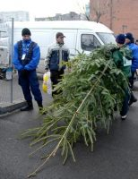 7.000 de pomi de Crăciun puși la vânzare de Direcția Silvică Suceava