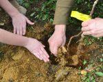 Luna plantării arborilor