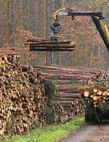 Preţul lemnului pentru încălzirea locuinţei variază în funcţie de specie