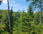 Sprijin pentru prima împădurire și crearea de suprafețe împădurite