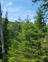 Confruntare pe teren între Greenpeace și Ministerul Apelor și Pădurilor, la Vama