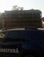 Amenzi și confiscări, în urma controalelor efectuate de Garda Forestieră Suceava