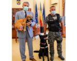 S-a finalizat proiectul de înființare a Poliției Animalelor