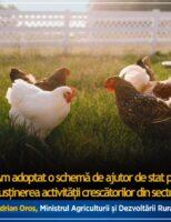 Noi măsuri de sprijin pentru susținerea activității crescătorilor din sectorul avicol