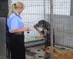 Medici veterinari vor fi transferați la Poliția Animalelor fără examen sau concurs
