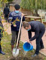 360 de puieți plantați în Zona de Agrement Tătărași
